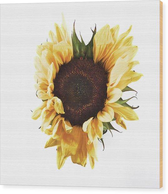 Sunflower #1 Wood Print