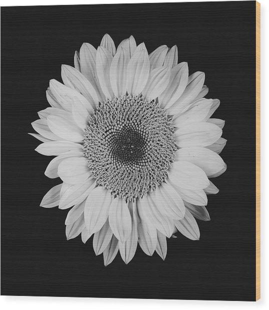 Sunflower #10 Wood Print
