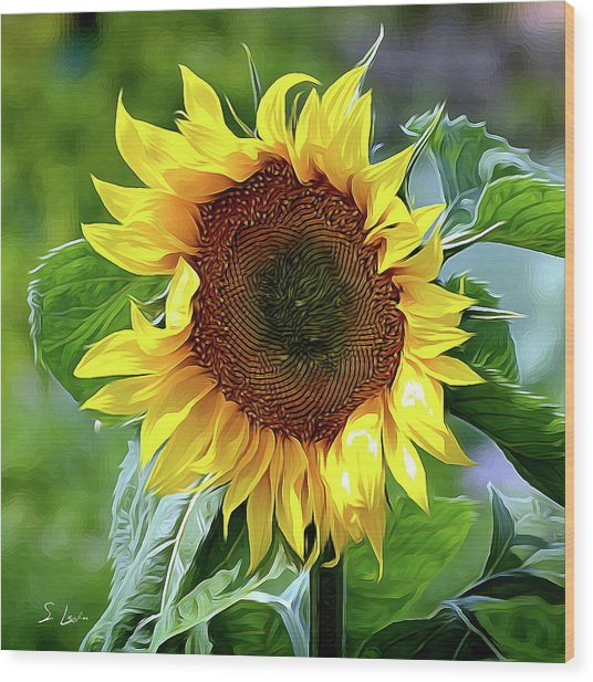 Sunflower 10...10.28 Yellow Symbolised Happiness Wood Print