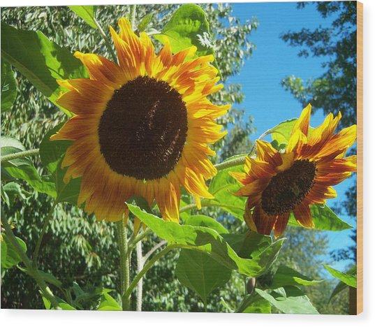 Sunflower 102 Wood Print by Ken Day