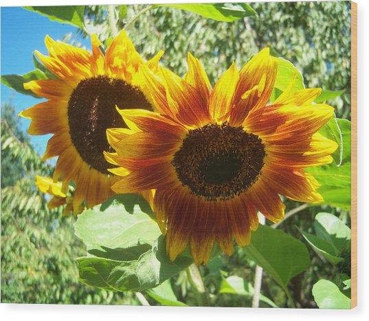 Sunflower 115 Wood Print by Ken Day