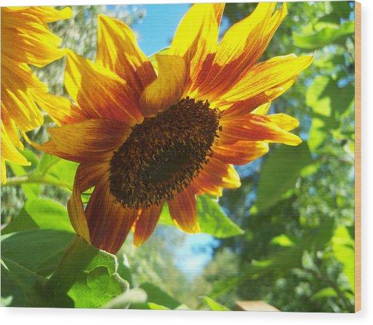 Sunflower  119 Wood Print by Ken Day