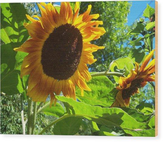Sunflower 122 Wood Print by Ken Day