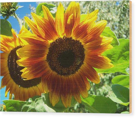 Sunflower 140 Wood Print by Ken Day