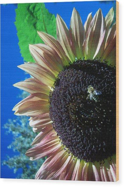 Sunflower 142 Wood Print by Ken Day