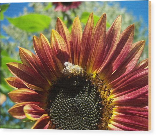 Sunflower 146 Wood Print by Ken Day