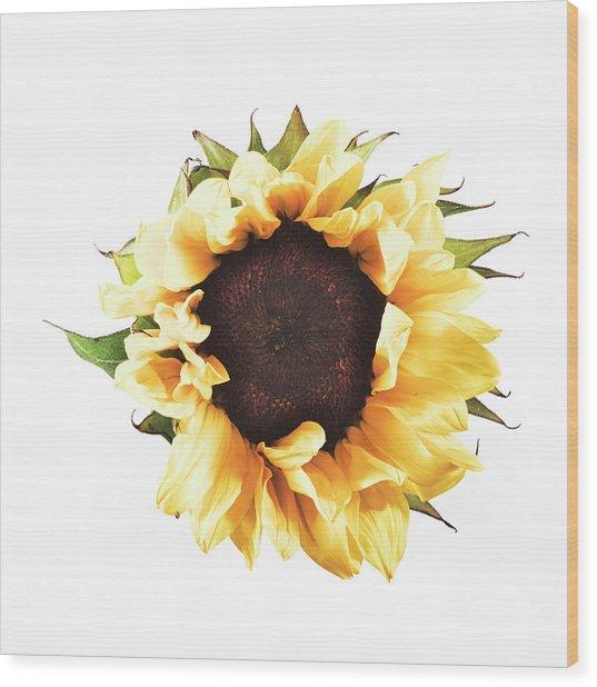 Sunflower #2 Wood Print