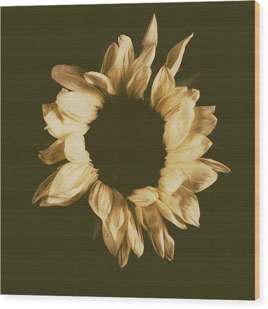 Sunflower #3 Wood Print