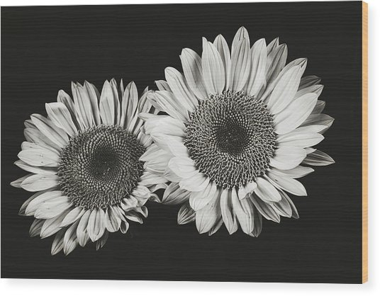 Sunflower #5 Wood Print