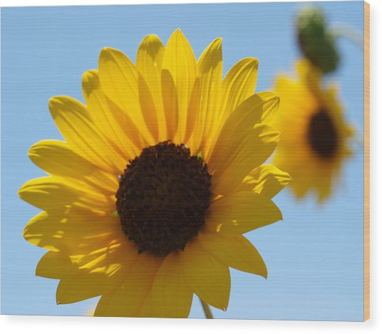 Sunflower 4 Wood Print by James Granberry