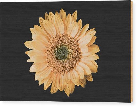 Sunflower #6 Wood Print