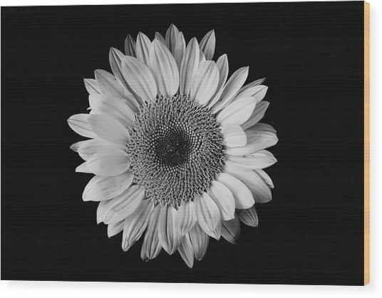 Sunflower #7 Wood Print