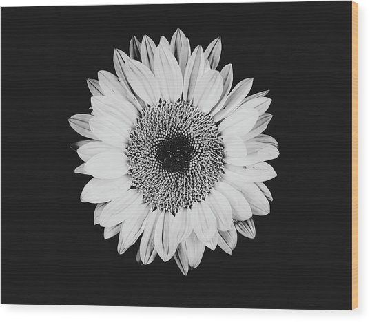 Sunflower #8 Wood Print