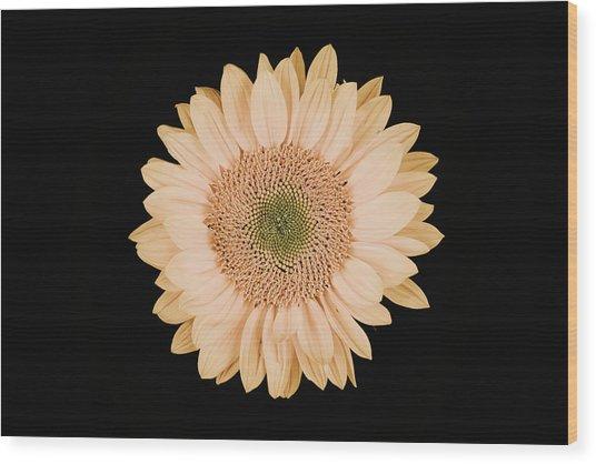 Sunflower #9 Wood Print