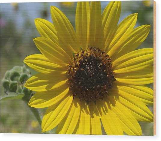 Sunflower 9  Wood Print by James Granberry
