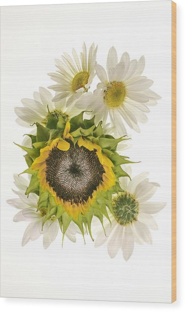 Sunflower And Daisies Wood Print