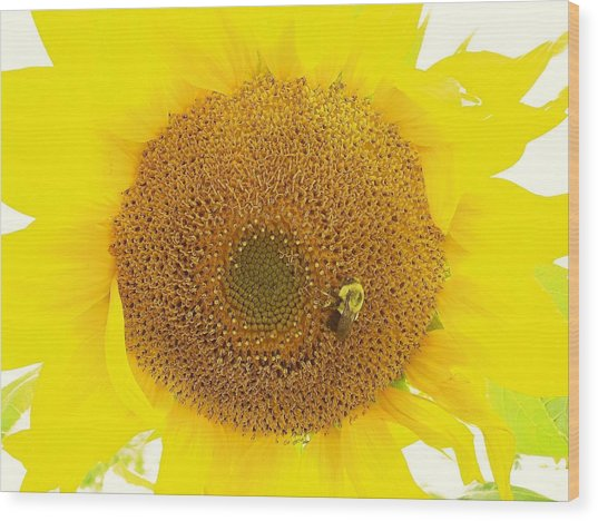 Sunflower And The Happy Bee Wood Print