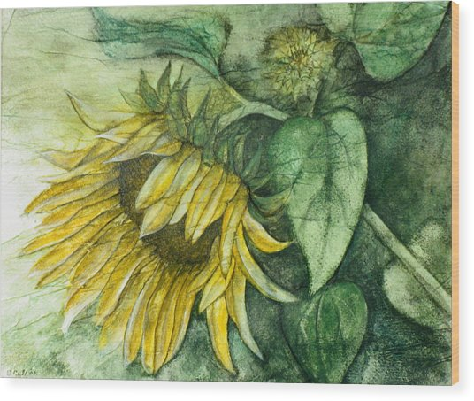 Sunflower At Dusk Wood Print by Sandy Clift
