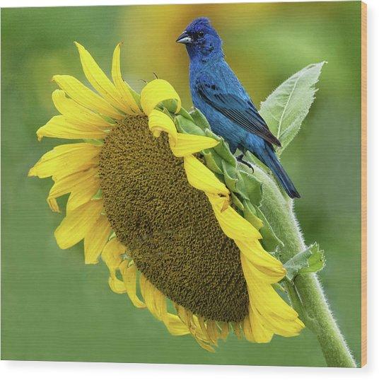 Sunflower Blue Wood Print