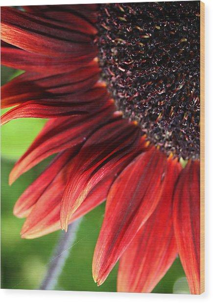 Sunflower Wood Print by Carol Hicks