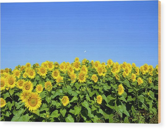 Sunflower City Wood Print by Gary Smith