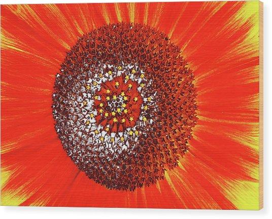 Sunflower Close Wood Print