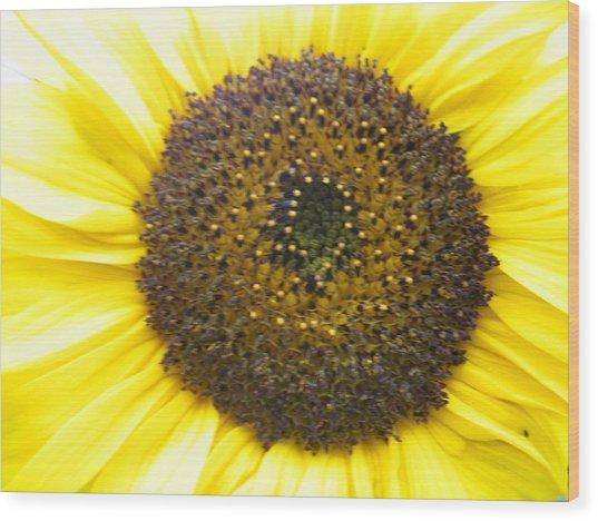 Sunflower Close Up Wood Print