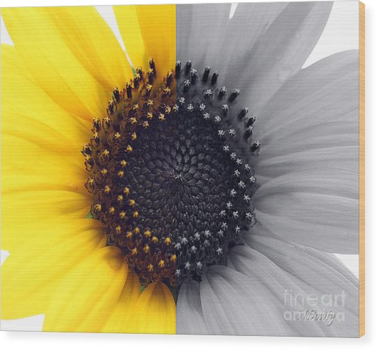 Sunflower Equinox Wood Print