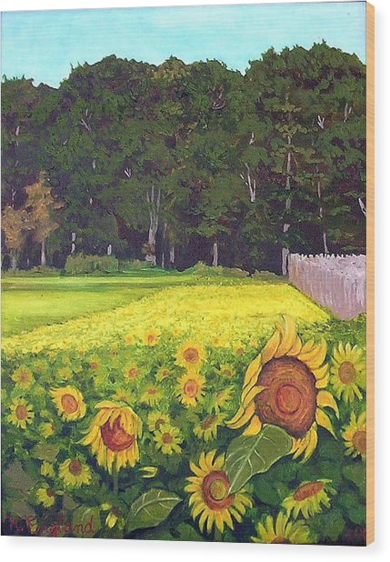 Sunflower Field Wood Print by Hilary England