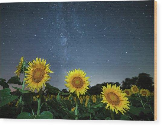 Sunflower Galaxy V Wood Print