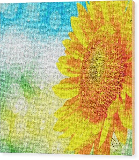 Sunflower In A Sunshower Wood Print