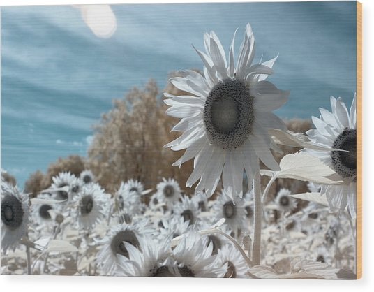 Sunflower Infrared  Wood Print