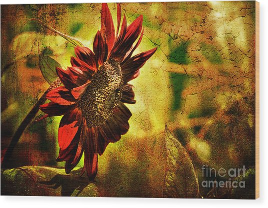 Wood Print featuring the photograph Sunflower by Lois Bryan