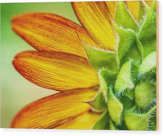Sunflower Macro 1 Wood Print