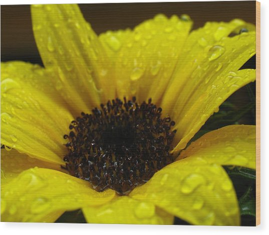 Sunflower Macro Wood Print by Juergen Roth