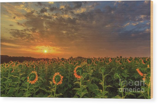 Sunflower Peak Wood Print