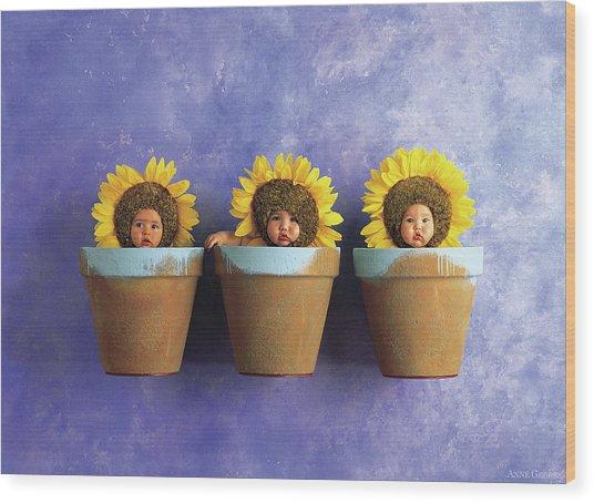 Sunflower Pots Wood Print
