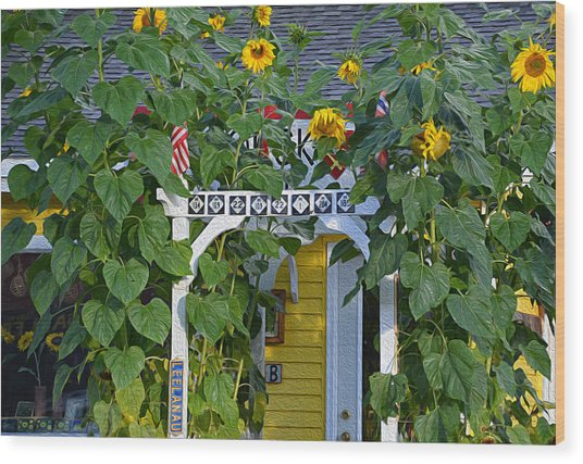 Sunflower Roads Wood Print