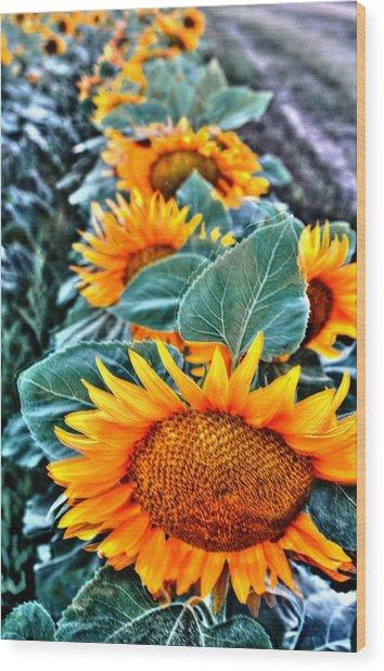 Sunflower Row Wood Print