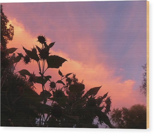 Sunset In Chatfield Wood Print