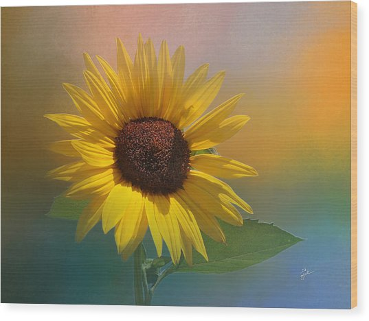 Sunflower Summer Wood Print