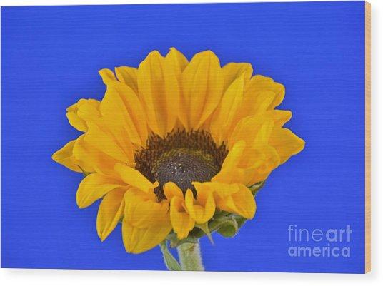 Sunflower Sunshine 406-6 Wood Print