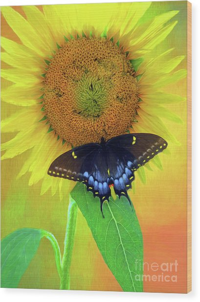 Sunflower With Company Wood Print