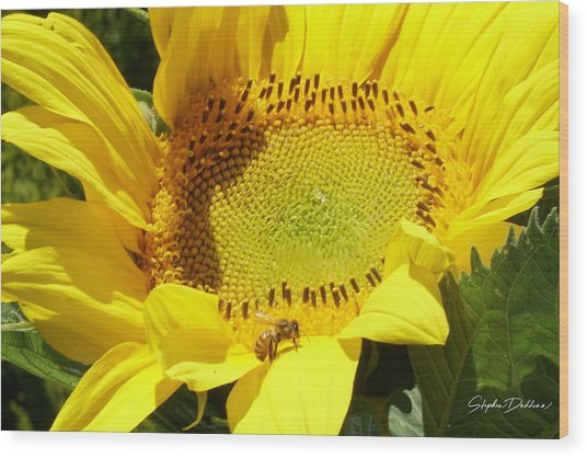 Sunflower With Honeybee Wood Print