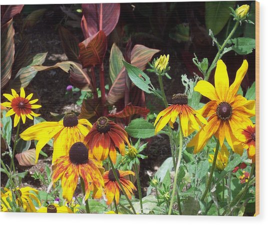 Sunflowerland Wood Print by Jean Booth