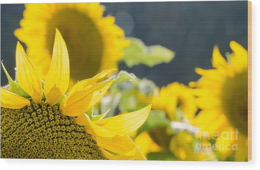 Sunflowers 14 Wood Print