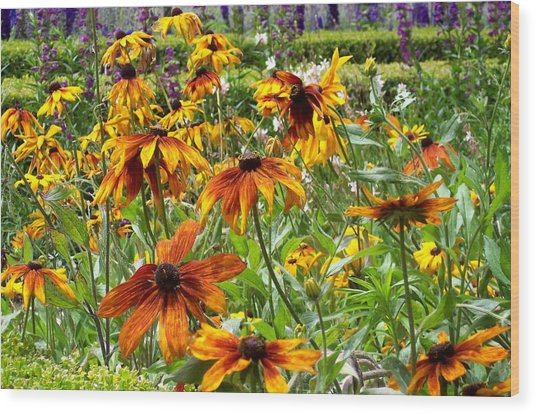Sunflowers And Friends Wood Print by Jean Booth