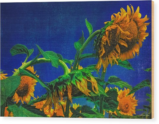 Sunflowers Awakening Wood Print