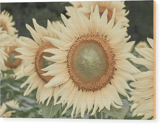 Sunflowers Detail Wood Print