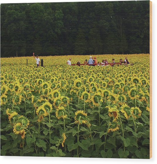 Sunflowers Everywhere Wood Print